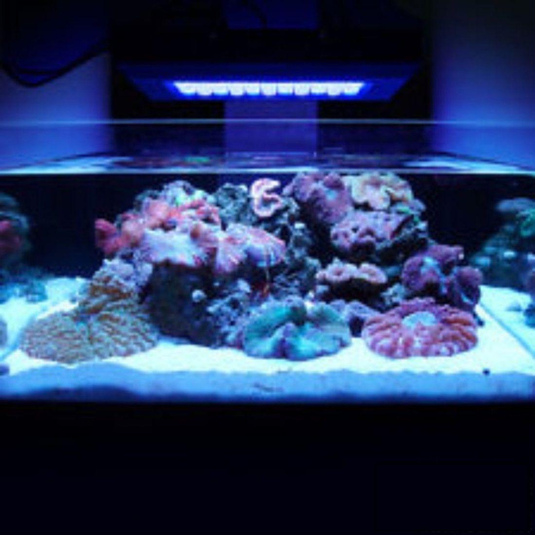 Dalle D Eclairage Pour Aquarium 165w Led 220v Blanc Bleu
